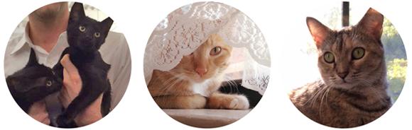 Rachel Wiseman's cats